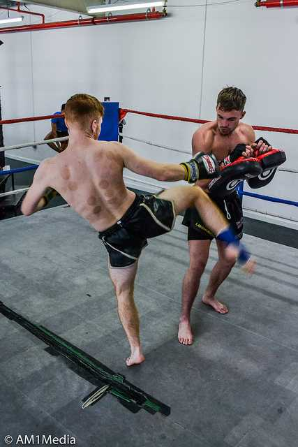 extensive review of windy muay thai boxing gloves